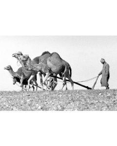 Morocco: Moroccan farmers