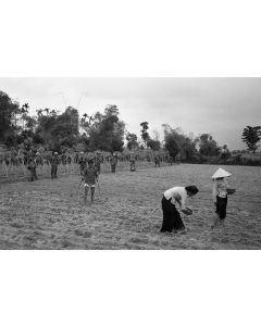 Cavalrymen on patrol walk past farmers tending to their rice paddy, 1968